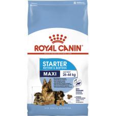 Royal Canin (Роял Канин) Maxi Starter первый прикорм для щенков крупных пород и корм для собак в период беременности и лактации 1кг; 4кг; 15кг