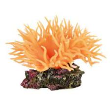 Trixie (Трикси) Грот Анемон, оранжевый
